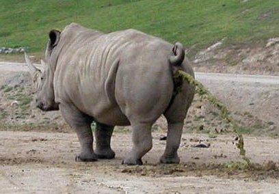 Üks vägev Aafrika loom
